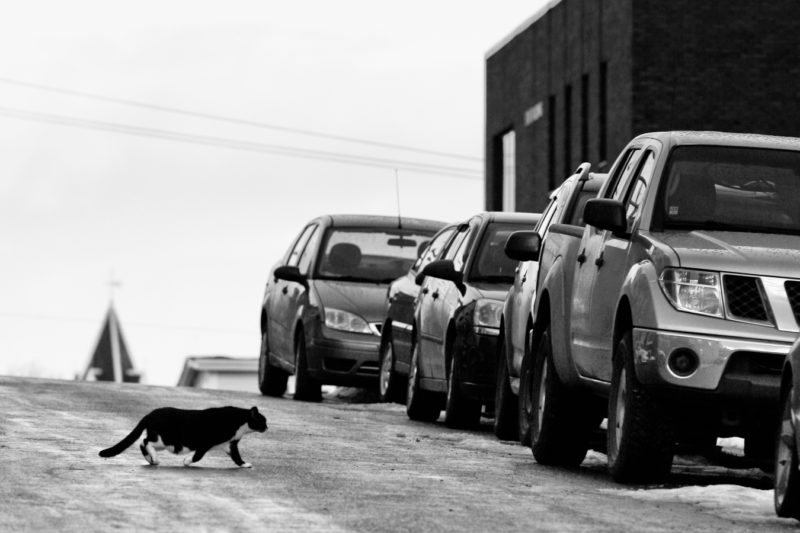 Kitty crossing shot by //d. for A City Like Ours