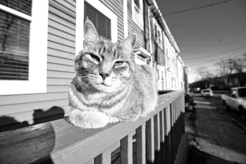 Gingercat owns this town shot by //d. for A City Like Ours
